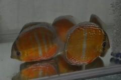 27-02-2011_20-54_445395