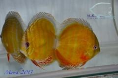 11-03-2013_12-27_3515_DSC7791_copy
