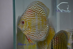 11-03-2013_12-27_35785_DSC7858_copy