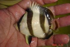 peixes marinhos 007